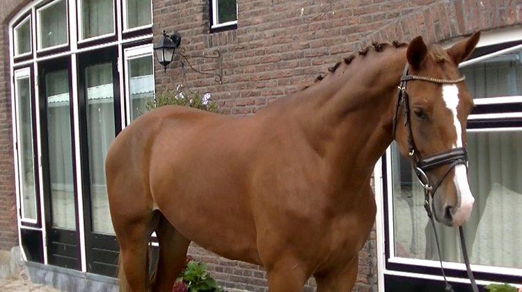 Dutch Design 183