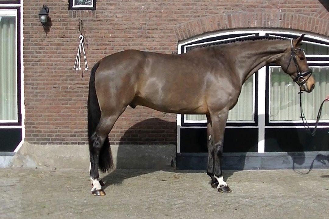 Pablo van Berkenbroek 381