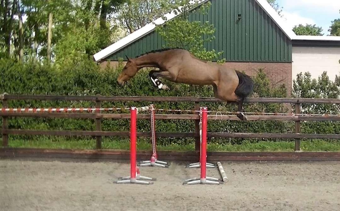 Horses For Sale | Top Horses, LLC