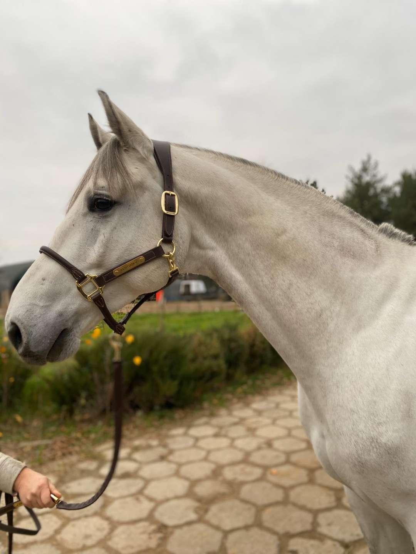 Cavalo Z 470
